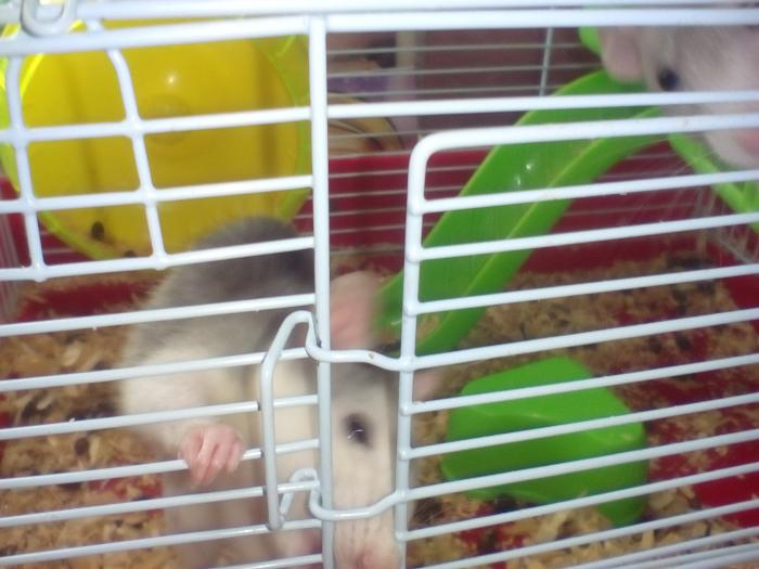 Как слепить крысу из пластилина своими руками поэтапно